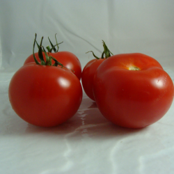 Tomate Ronde x500g