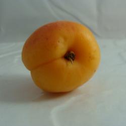 Abricot x 400g