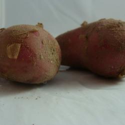 Pomme de terre Rouge x 1kg