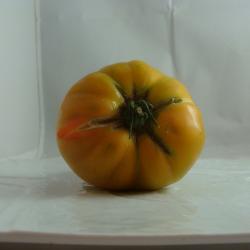 Tomate Jaune *PROMO*