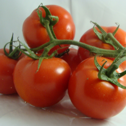 Tomate Grappe x 500g