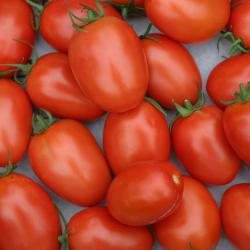 Tomate Allongée x 600g