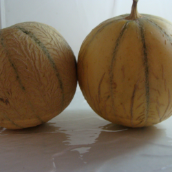 Lot de 2 Melons Charentais...
