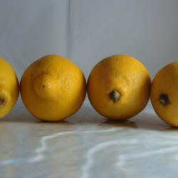 Lot de 3 citrons + 1 gratuit