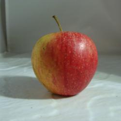 Pomme Pinova