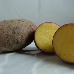 Pomme de terre à peau Rouge...