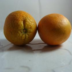 Orange x 600g