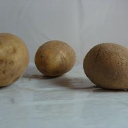Pomme de terre Bernardette...