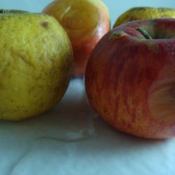 Pommes à Compote x 1.5kg
