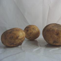 Pomme de terre Nouvelle x 500g