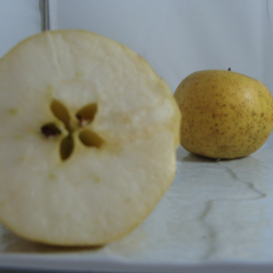 Pomme Lafayette x 500g