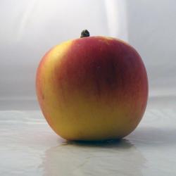 Pomme Belrène x500g