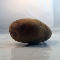 Pomme de terre Nicola x 500g